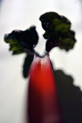 Vegetable - p1468m1559183 by Philippe Leroux