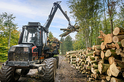 Log carrier machine stacking logs in sustainable forest - p924m2271174 by Monty Rakusen