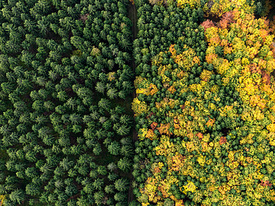 Aerial view green treetops turning color in autumn, Donaueschingen, Baden-Wuerttemberg, Germany - p301m2017356 by Stephan Zirwes