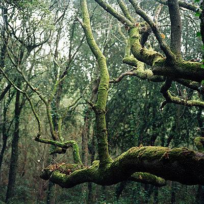 Wald - p1097m893978 von Mélanie Bahuon