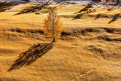 Herbstliche Buche - p248m1502190 von BY