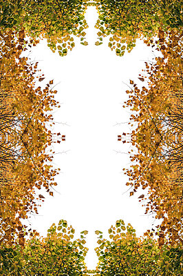 Abstract kaleidoscope pattern of overhead autumnal tree canopies - p1047m2204348 by Sally Mundy