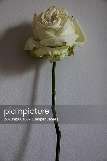 p378m2061337 von Jasper James