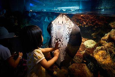 Enoshima Aquarium - p851m2077308 by Lohfink