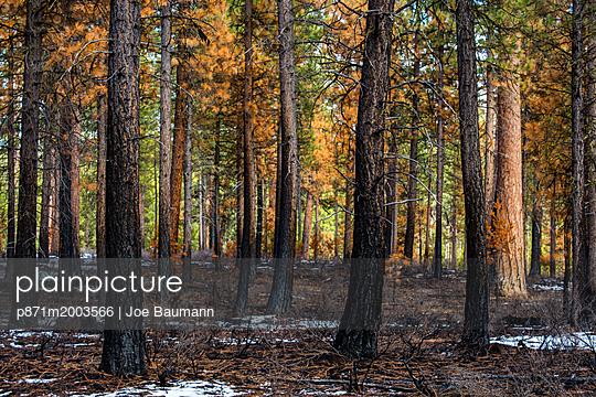 p871m2003566 von Joe Baumann