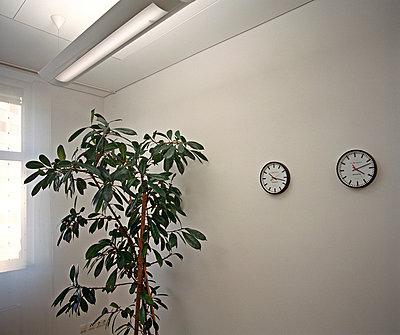 Office plant - p2680733 by Rui Camilo