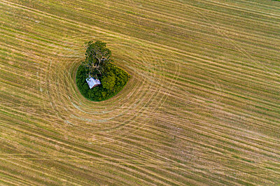 A field with a tree and hut in summer, Southwest Sweden - p300m2132576 by A. Tamboly