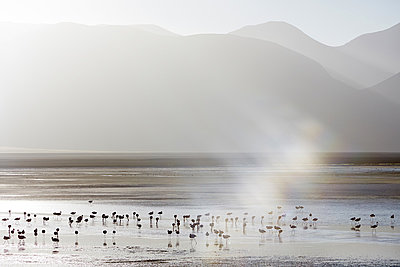 Laguna Colorada - p719m883209 by Rudi Sebastian