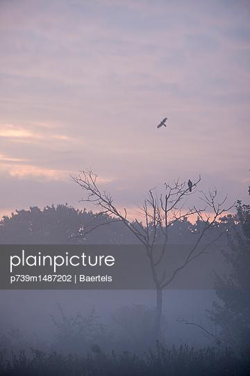 Birds in morning mist - p739m1487202 by Baertels