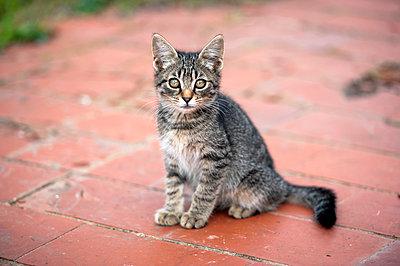 Kleine Katze - p220m858628 von Kai Jabs