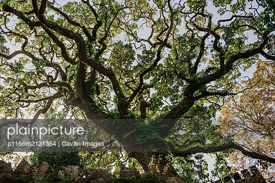 Tree - p1166m2131354 by Cavan Images