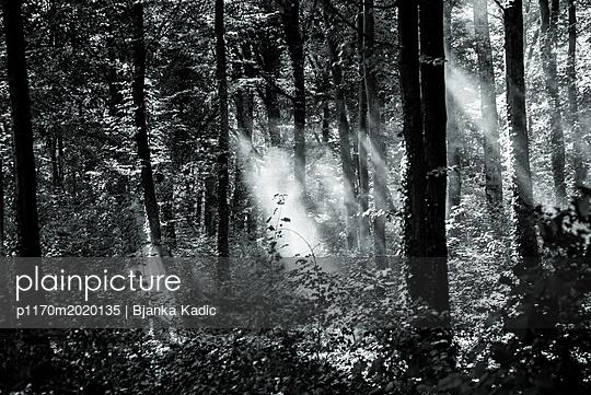 Sonnenstrahlen erhellen den Wald - p1170m2020135 von Bjanka Kadic