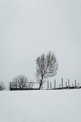 Bäume im Winter - p1170m2064569 von Bjanka Kadic