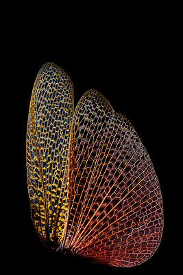 Delicate wings - p587m2115475 by Spitta + Hellwig