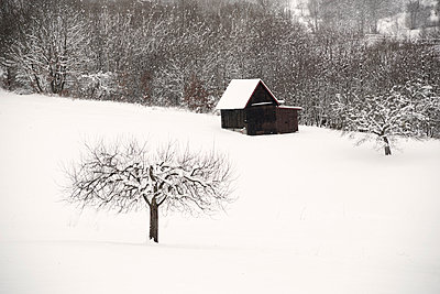 Shed in winter - p992m982409 by Carmen Spitznagel