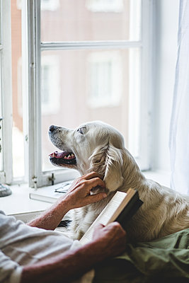 Midsection of senior man stroking dog while holding book on bed at home - p426m2046391 by Maskot