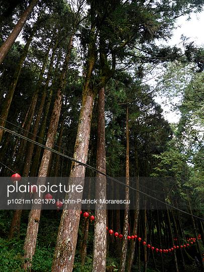 Alishan National Scenic Area - p1021m1021379 by John-Patrick Morarescu