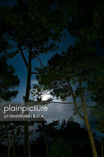 Mondlicht über einem Wald - p110m2055458 von B.O.A.