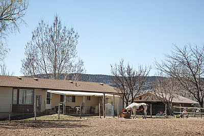 Farmhouse with horse - p1291m1531869 by Marcus Bastel