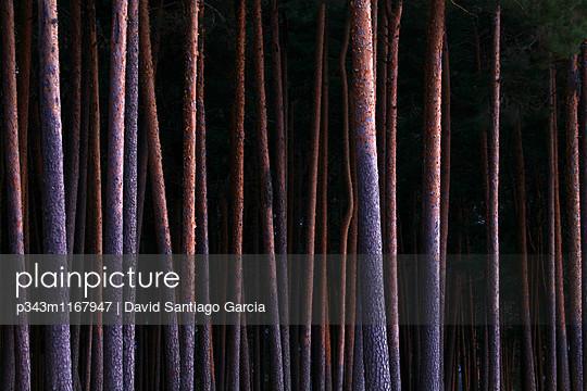 p343m1167947 von David Santiago Garcia