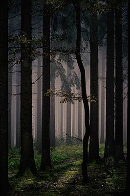 Wald - p1088m902215 von Martin Benner