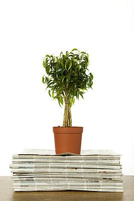 Topfpflanze auf Stapel Zeitungen - p4736761f von STOCK4B-RF