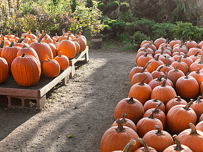 Pumpkins - p956m709692 by Anna Quinn