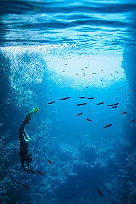 Young woman snorkeling underwater among fish, Vava'u, Tonga, Pacific Ocean - p1023m2024456 by Martin Barraud