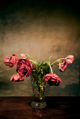 Withered bunch of tulips in crystal vase - p1312m2272152 by Axel Killian
