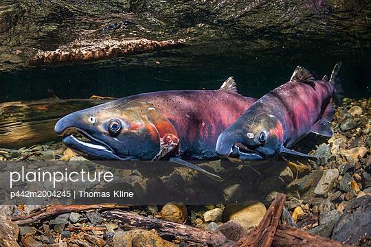 p442m2004245 von Thomas Kline