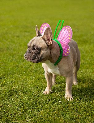 Süßer Schmetterlings-Hund - p045m1181829 von Jasmin Sander
