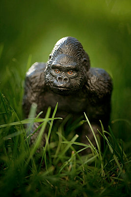 Gorilla hiding in the grass - p4451371 by Marie Docher