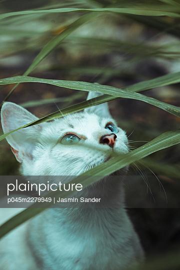 p045m2279949 by Jasmin Sander