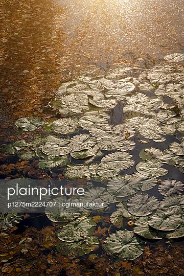 Seerosen im Herbst - p1275m2224707 von cgimanufaktur
