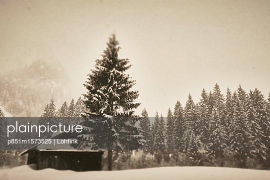 Verschneiter Nadelwald Kleinwalsertal - p851m1573525 von Lohfink