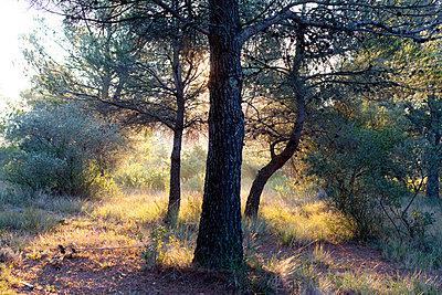 Licht - p1116m1216991 von Ilka Kramer