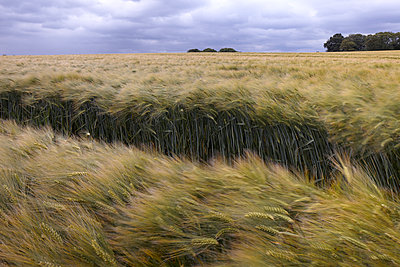 Monoculture - p897m1083234 by MICK