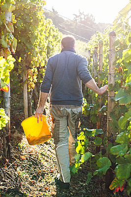 Im Weingebiet - p1271m1539695 von Maurice Kohl