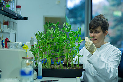 Young female biologist working at plant research labroratory - p300m977803f by Sigrid Gombert