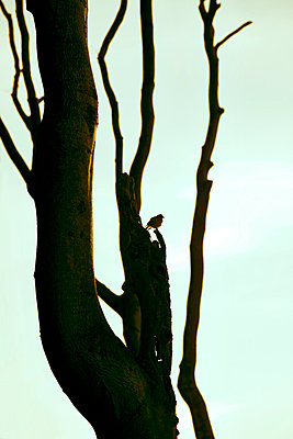 Einsamer Vogel - p4320730 von mia takahara
