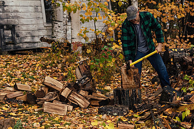 Mature man chopping logs in autumn forest, Upstate New York, USA - p924m1404231 by heshphoto