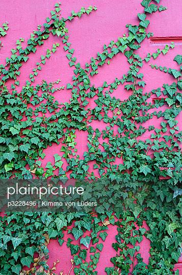 Kletterpflanze - p3228496 von Kimmo von Lüders
