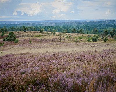 Heath - p1124m931783 by Willing-Holtz