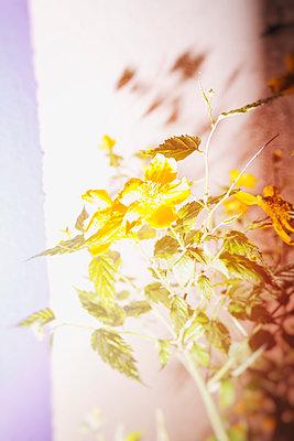 Blossom - p1149m1132456 by Yvonne Röder