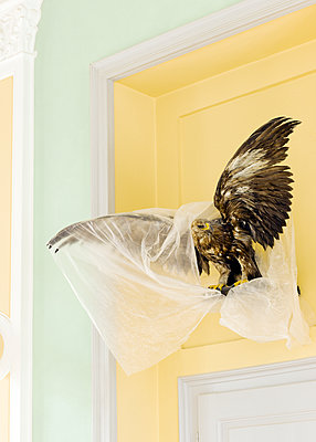 Taxidermied eagle under plastic foil - p1629m2211333 by martinameier