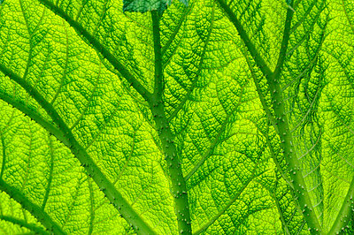 A leaf close-up - p5754747 by Mikael Svensson