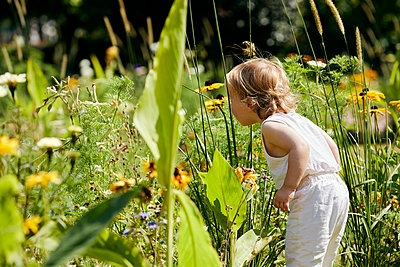 Toddler boy looking at flowers in the sunshine - p1540m2289807 by Marie Tercafs