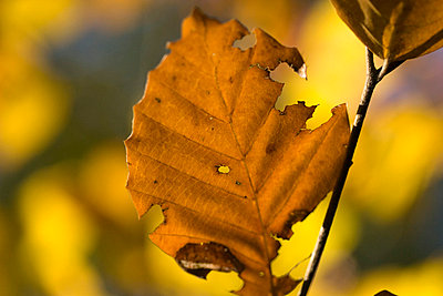 Autumn leaf - p4170078 by Pat Meise