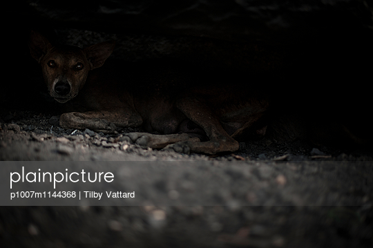 Eyes of a dog hidden in the shadow - p1007m1144368 by Tilby Vattard