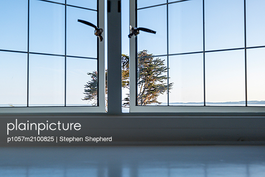Looking out through a leaded window at a large tree in the centre of the frame. - p1057m2100825 by Stephen Shepherd